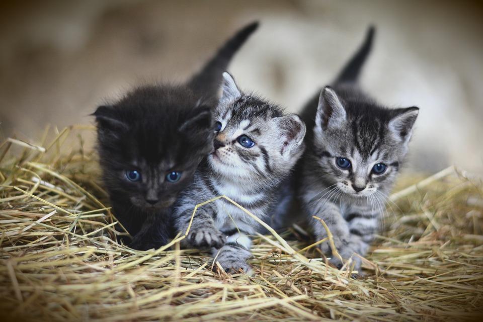 cat-3535404 960 720 – Ewita life 62f4201aba3